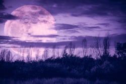 Supermoon. Night landscape of purple sky with dark cloudy and moon over silhouette of trees in a wilderness area, outdoor in gloaming time. Serenity nature background. The moon taken with my camera.