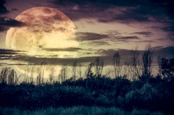Supermoon. Night landscape of sky with dark cloudy and moon over silhouette of trees in a wilderness area, outdoor in gloaming. Serenity nature background. Vintage tone. The moon taken with my camera.