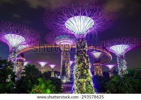 Supertree garden at night, garden by the bay