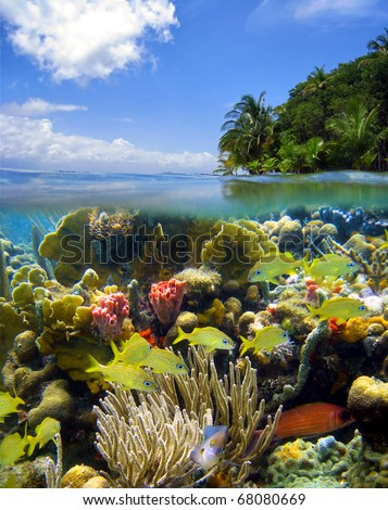 Surface and underwater scene with colorful sea life and tropical vegetation, Caribbean