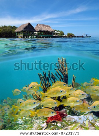 Surface and underwater view in the Caribbean sea with a tropical restaurant over the water and seabed with a shoal of fish, Cayo coral, Bocas del Toro, Panama