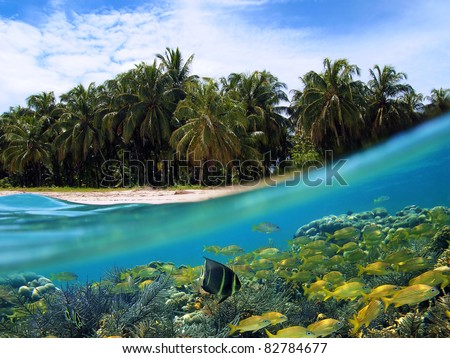 Surface and underwater view of a tropical beach with coconut palm trees and school of fish in a coral reef, Caribbean sea, Panama