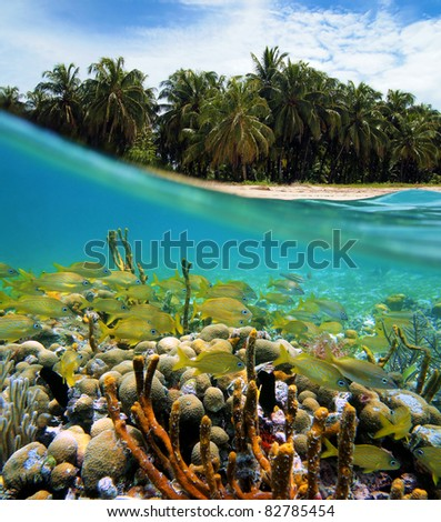 Surface and underwater view with coconuts trees, sand, coral and fish, Bocas del Toro, Panama - stock photo