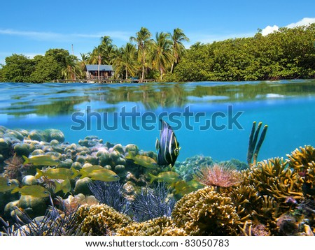 Surface and underwater view with coral reef fish, a bungalow and lush tropical vegetation, Bocas del Toro, Panama, Caribbean sea