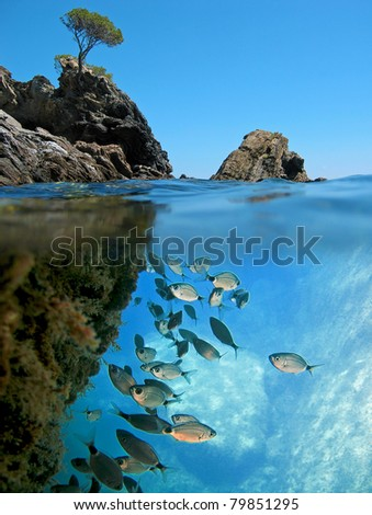 Surface and underwater view with rocky islet and school of Saddled Seabream fish  Mediterranean sea, Cadaques,  Catalonia, Costa Brava, Spain