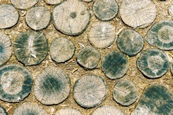Surface from Slices of wooden trees texture, natural pattern, background.