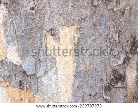 Surface is textured pattern tree. Big tree bark texture with natural patterns, natural beauty of the original.