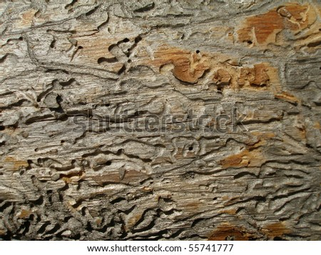 Surface of an old log with the traces from winds and bark beetles