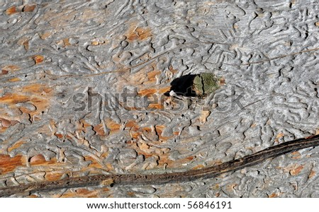 Surface of an old log with the traces from winds and bark beetles - stock photo