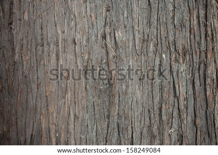 surface of pine trunk background