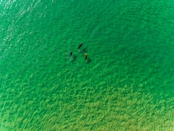 Surfers Waiting Waves on the Surface of the Ocean, aerial view