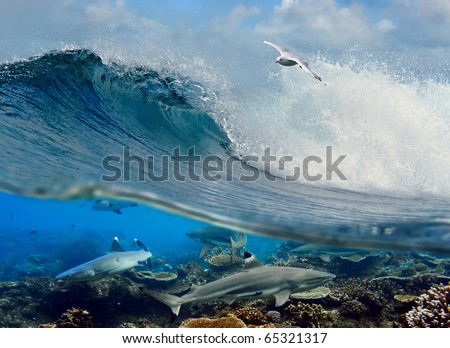 surfing ocean wave swirl white seagull flying above and four reef sharks underwater over corals