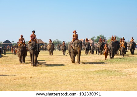 SURIN, ISAN, THAILAND - NOVEMBER 20, 2010: A large group of elephants walk on the performance field during the annual Surin Elephant Roundup on November 20, 2010 in Surin, Thailand - stock photo