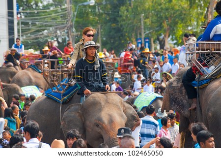 Surin, Isan, Thailand - November 19, 2010: Female Thai passenger riding on elephant back in a large crowd of people and animals at the annual Surin Elephant Roundup