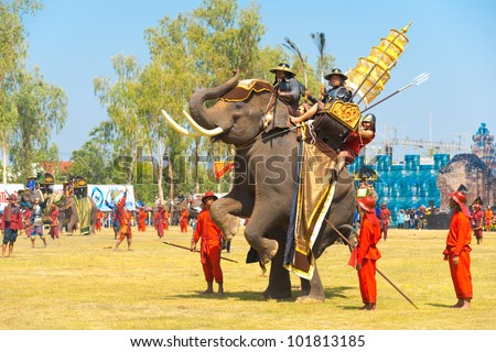 Surin, Thailand - November 20, 2010: King Naresuan elephant rearing up on its back hind legs during a Burmese Siamese War reenactment at the Surin Elephant Roundup