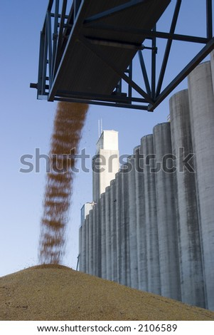 surplus corn at a grain elevator being piled up on the ground