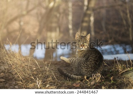 Surprised cat in forest