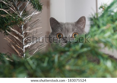 Surprised cat in the picture under the Christmas tree.