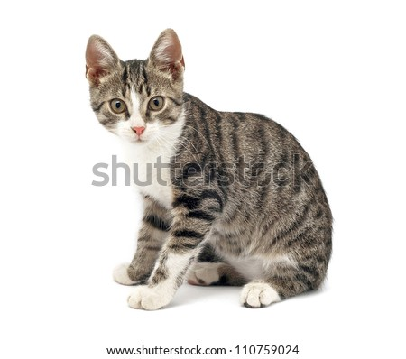 surprised cat on white background