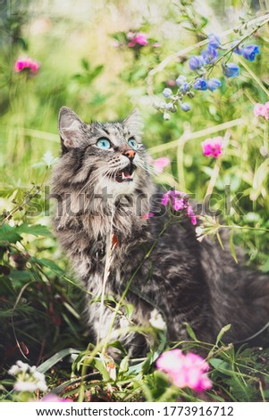 Surprised cat sits in the garden, looks at the flowers and meows. Walking Pets in nature in the Park
