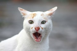 Surprised face of street cat. Wow expression cat face with open mouth. Blur cat face