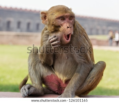Surprised monkey