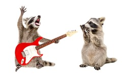 Surprised raccoon looking at a raccoon playing on electric guitar isolated on white background