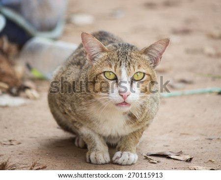 Surprising cat on the ground