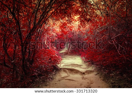 Stock Photo Surreal colors of fantasy landscape at tropical jungle forest with tunnel and path way through lush