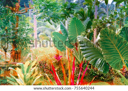 Surreal colors of fantasy tropical garden with amazing plants and flowers