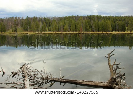 Surreal forest reflection on the Yellowstone River, Wyoming, USA.