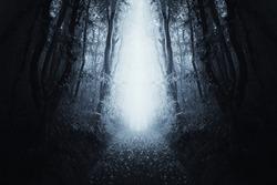 surreal forest scene, path through dark symmetrical woods landscape