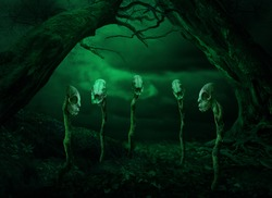 Surreal gothic horror landscape for Halloween. Scary dead trees and five skulls picked on sticks. Enchanted place of sorcerer or witch