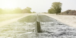 Surreal image: Large whale diving in an ashpalt road, soft colors