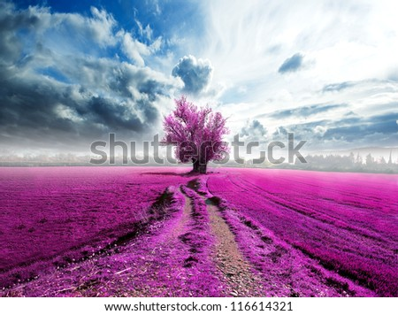 surreal landscape and tree on the road