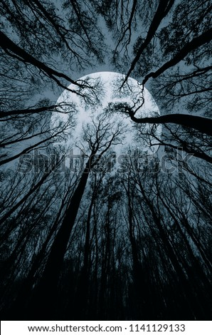 surreal landscape with huge moon or sun seen from scary forest #1141129133