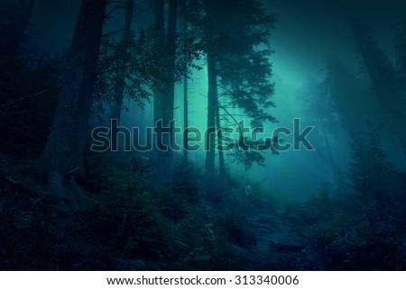 Surreal night forest scene: illustration