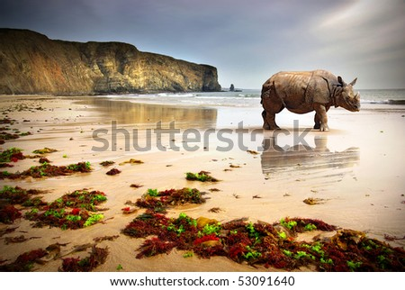 Surreal scene of a big Rhinoceros in an empty beach