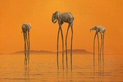 Surreal scene with three African elephants with enormous long legs walking in the calm sea against mysterious island on horizon lit by soft sunset orange light. Nature beauty concept