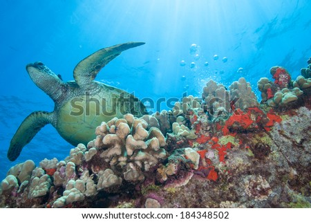 Surreal underwater image of a sea turtle bathed in sun rays