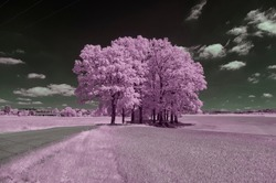Surrealistic infrared landscape with a group of trees created with a modified camera