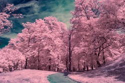 Surrealistic infrared photo from Castle Spilberk Park