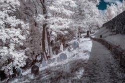 Surrealistic infrared photo on Trebic Jewish cemetery. Czech Republic