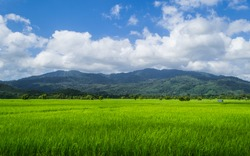 Surrounded by lush green paddy fields, vast. Sky with mountains in the background.