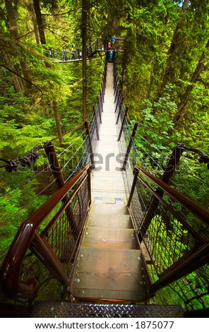 Suspension Bridge in the woods at Vancouver. More with keyword group14j