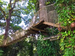 Suspension bridge in tropical forest. Hanging wooden bridge, rope walkway to the adventurous, cross to the other side. Hanging walkway for Treetop trail in the French West Indies.
