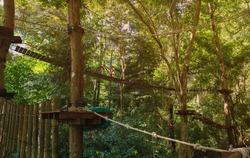 Suspension bridge, walkway  stairway to the adventurous, tree top cross to the other side.