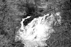 Swallow Falls bear Betws y Coed in North Wales in spring