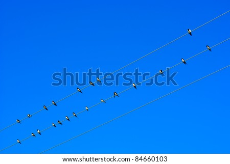 Swallow on electric wires in the sky