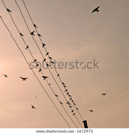 swallows landing on a wire